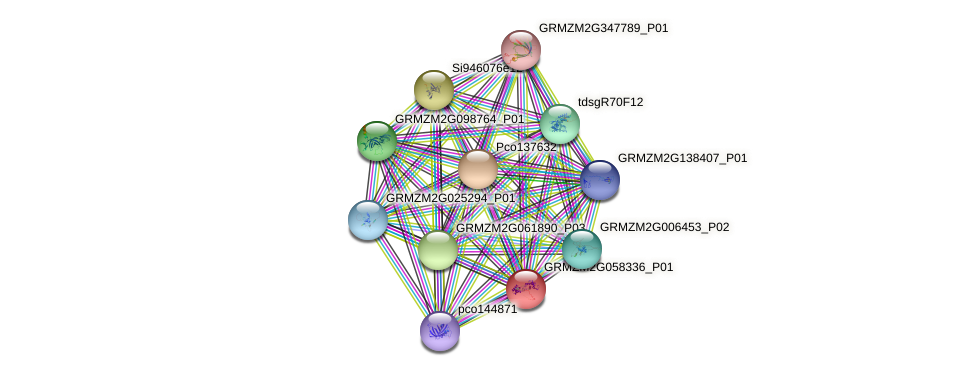 GRMZM2G058336_P01 protein (Zea mays) - STRING interaction network