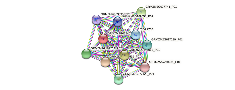 GRMZM2G058407_P01 protein (Zea mays) - STRING interaction network