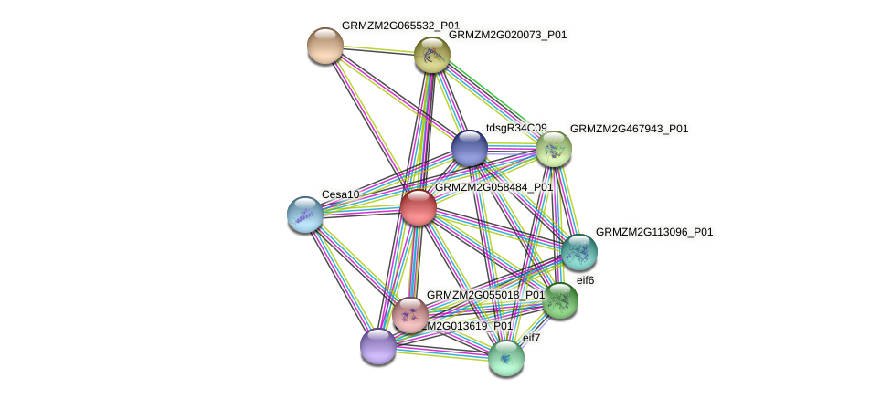 GRMZM2G058484_P01 protein (Zea mays) - STRING interaction network