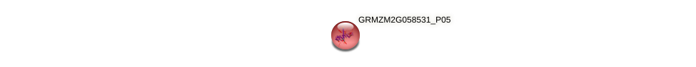 GRMZM2G058531_P05 protein (Zea mays) - STRING interaction network