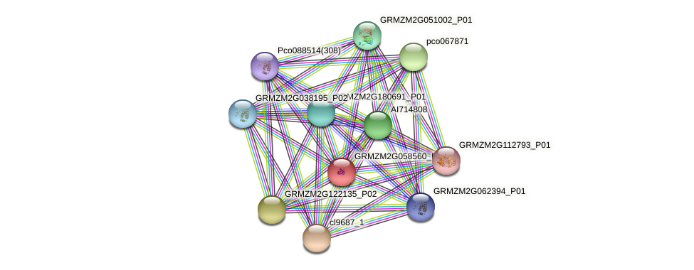 GRMZM2G058560_P01 protein (Zea mays) - STRING interaction network