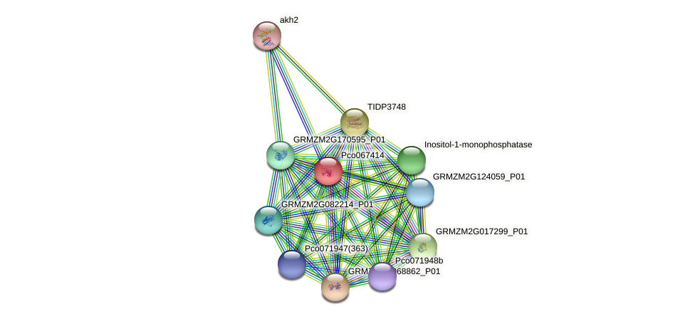 pco067414 protein (Zea mays) - STRING interaction network
