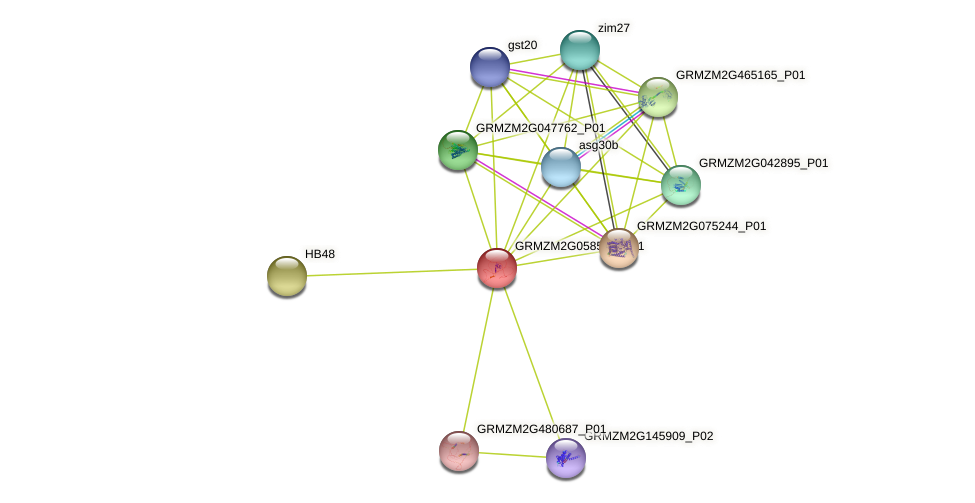 SBP28 protein (Zea mays) - STRING interaction network
