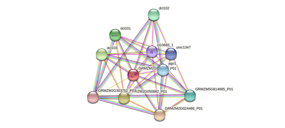 GRMZM2G058591_P01 protein (Zea mays) - STRING interaction network