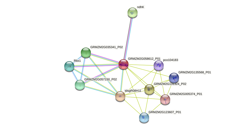 GRMZM2G058612_P01 protein (Zea mays) - STRING interaction network