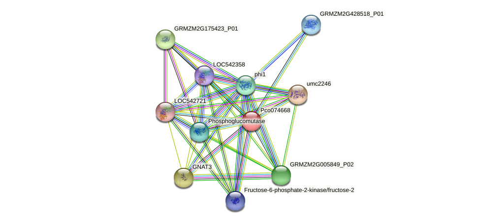 Zm.95342 protein (Zea mays) - STRING interaction network