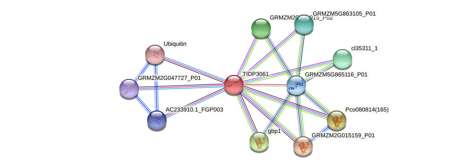 TIDP3061 protein (Zea mays) - STRING interaction network
