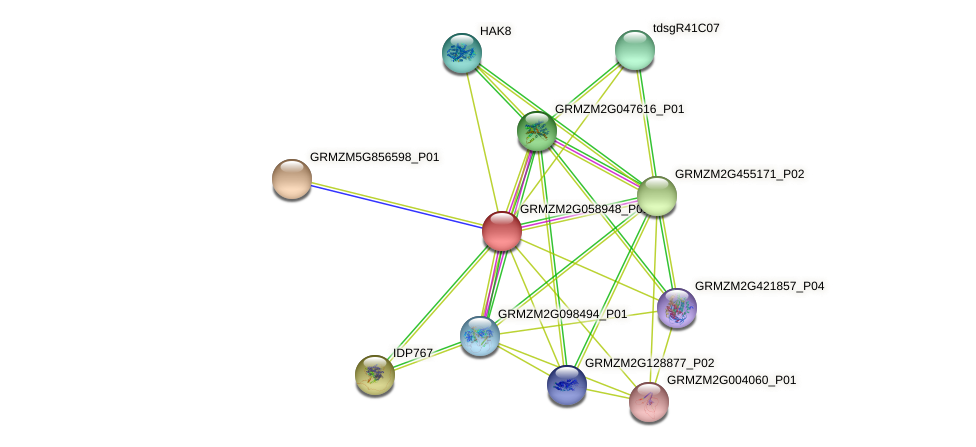 GRMZM2G058948_P01 protein (Zea mays) - STRING interaction network
