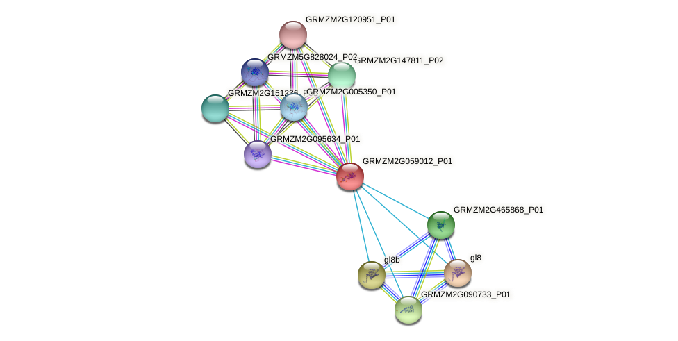 GRMZM2G059012_P01 protein (Zea mays) - STRING interaction network