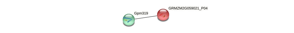 GRMZM2G059021_P02 protein (Zea mays) - STRING interaction network