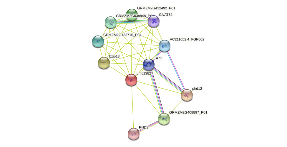 PHD13 protein (Zea mays) - STRING interaction network