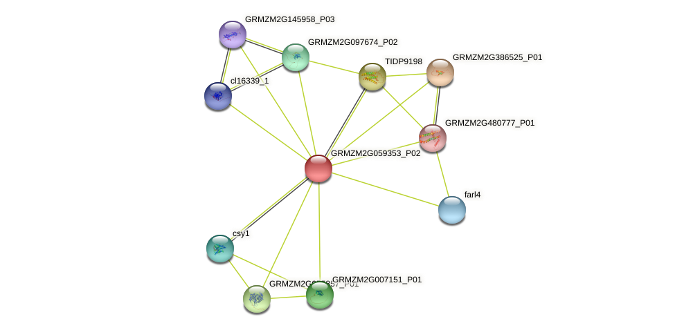 GRMZM2G059353_P01 protein (Zea mays) - STRING interaction network