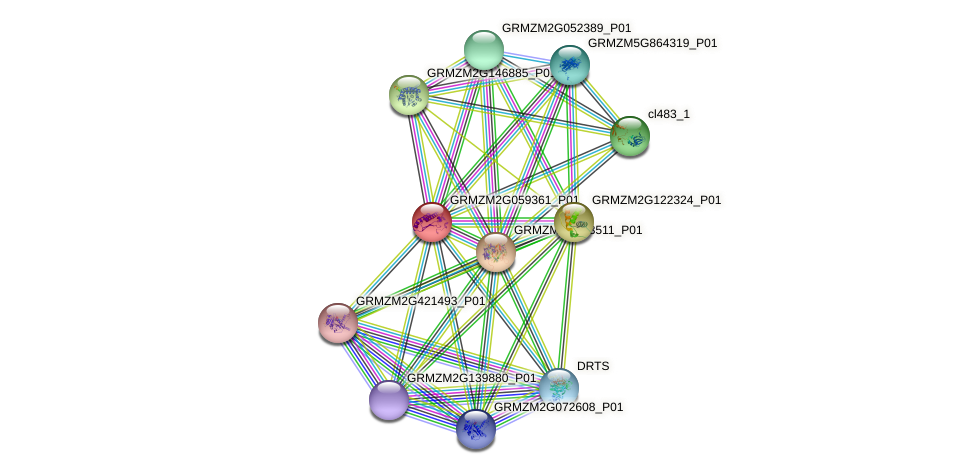 GRMZM2G059361_P01 protein (Zea mays) - STRING interaction network