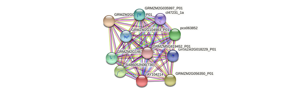 AY104214 protein (Zea mays) - STRING interaction network