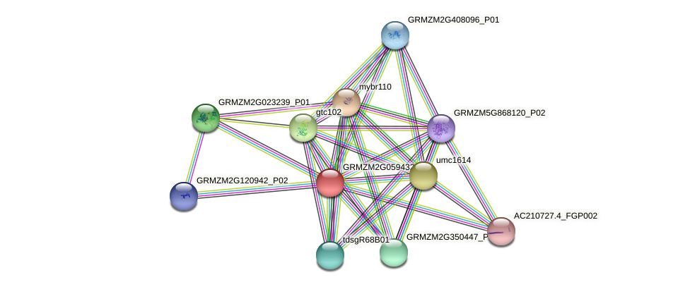 GRMZM2G059432_P01 protein (Zea mays) - STRING interaction network