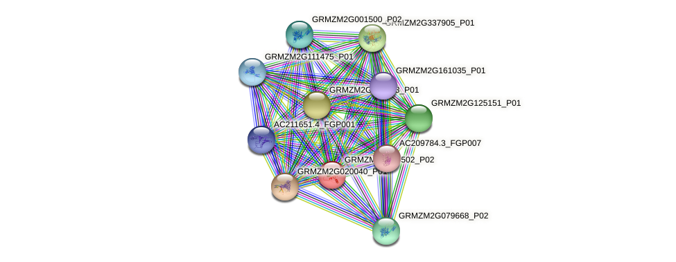 GRMZM2G059502_P02 protein (Zea mays) - STRING interaction network