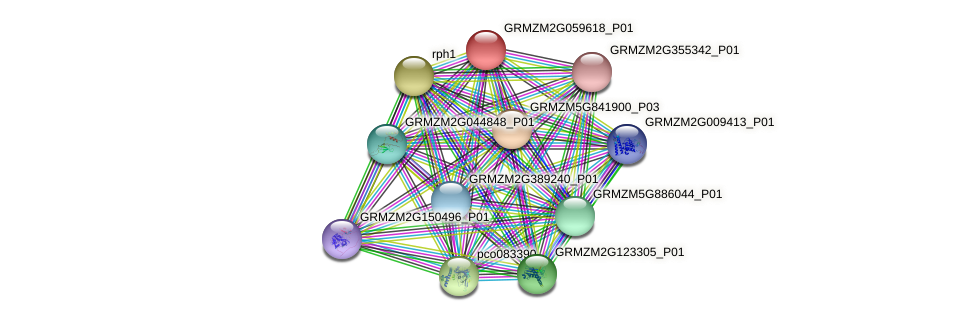 GRMZM2G059618_P01 protein (Zea mays) - STRING interaction network
