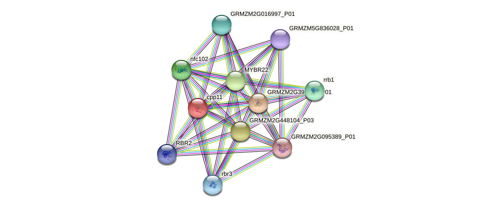 Zm.30314 protein (Zea mays) - STRING interaction network
