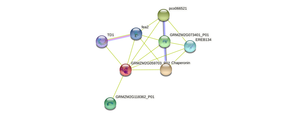 GRMZM2G059703_P02 protein (Zea mays) - STRING interaction network