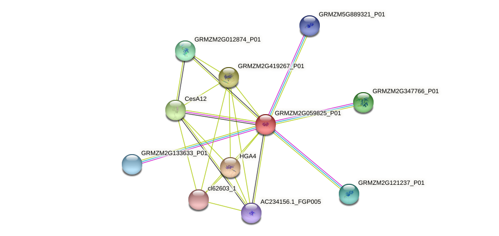 GRMZM2G059825_P01 protein (Zea mays) - STRING interaction network