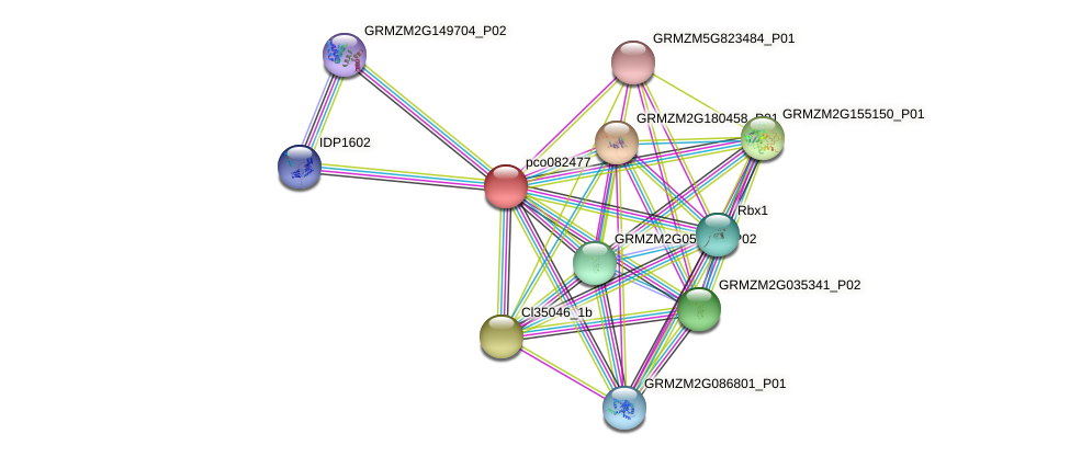 pco082477 protein (Zea mays) - STRING interaction network