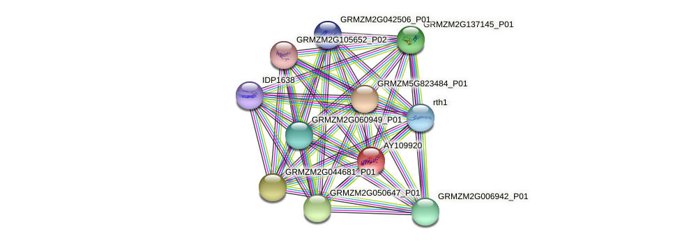 AY109920 protein (Zea mays) - STRING interaction network