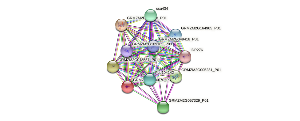 GRMZM2G060070_P01 protein (Zea mays) - STRING interaction network