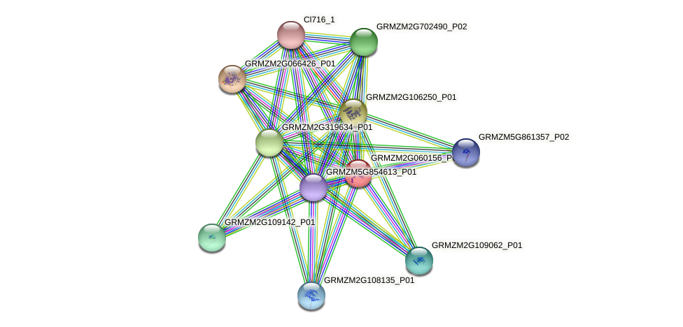 GRMZM2G060156_P01 protein (Zea mays) - STRING interaction network