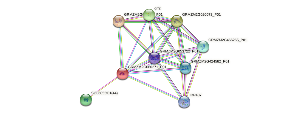 GRMZM2G060271_P01 protein (Zea mays) - STRING interaction network