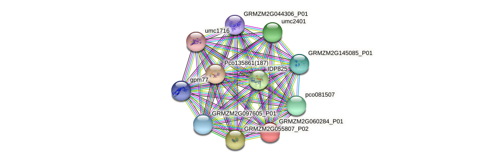 GRMZM2G060284_P01 protein (Zea mays) - STRING interaction network