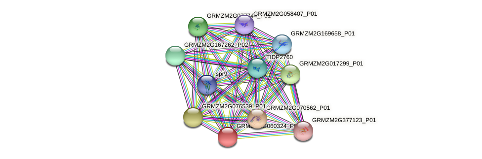Zm.37429 protein (Zea mays) - STRING interaction network