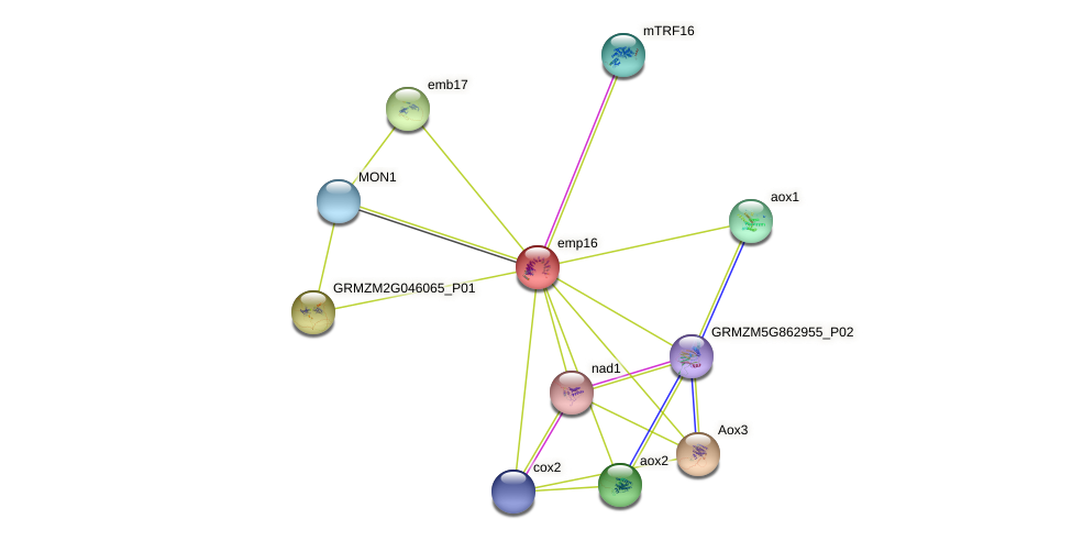 emp16 protein (Zea mays) - STRING interaction network