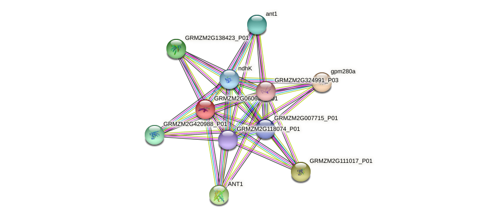 GRMZM2G060630_P01 protein (Zea mays) - STRING interaction network