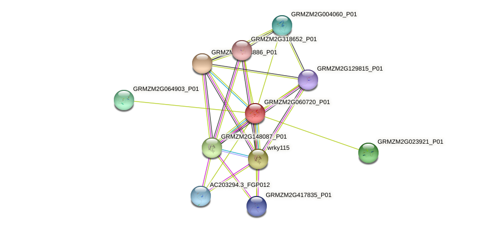 GRMZM2G060720_P01 protein (Zea mays) - STRING interaction network