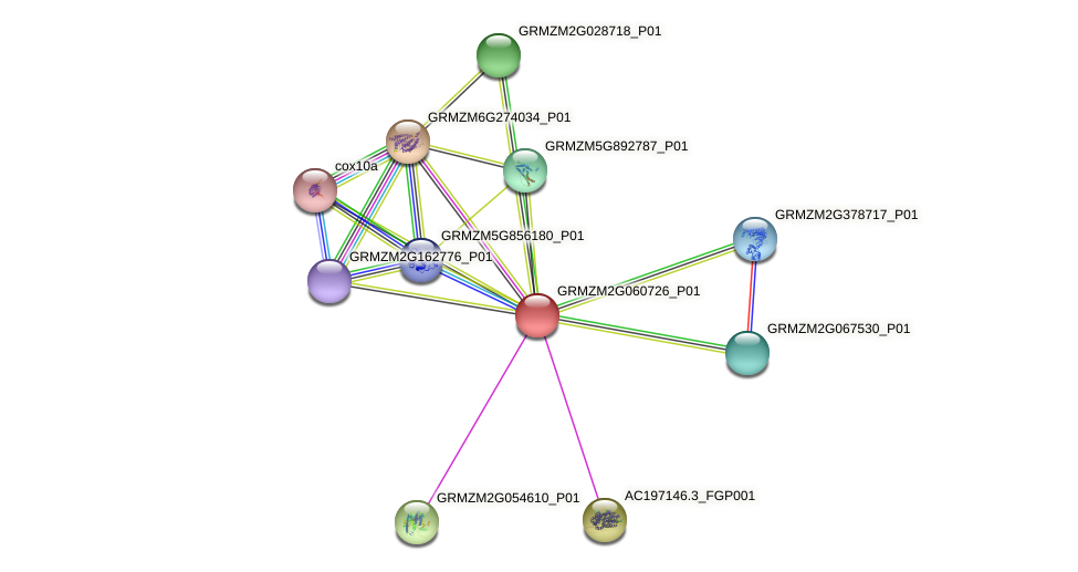 GRMZM2G060726_P01 protein (Zea mays) - STRING interaction network