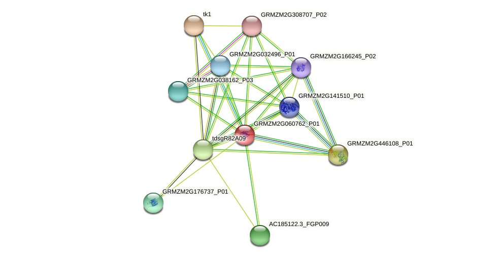 GRMZM2G060762_P01 protein (Zea mays) - STRING interaction network