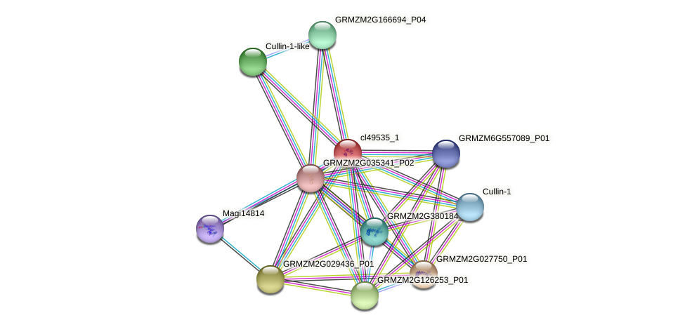 cl49535_1 protein (Zea mays) - STRING interaction network