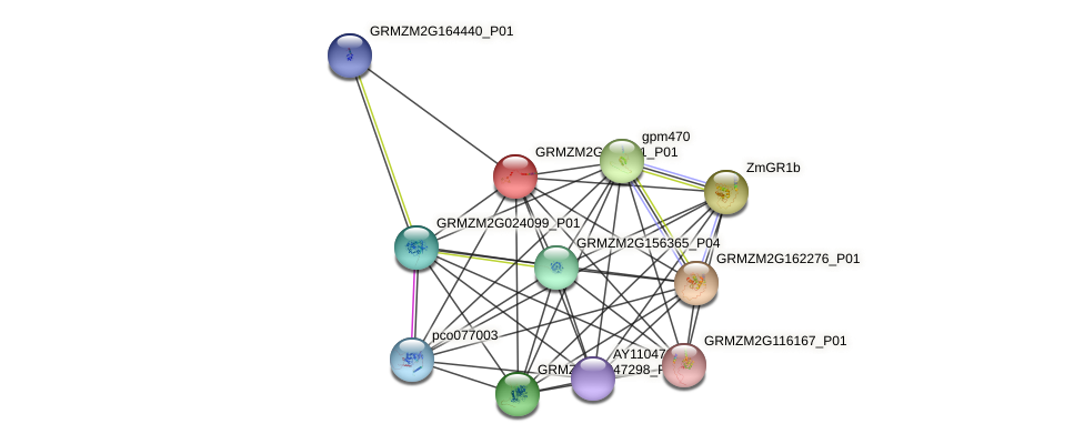 GRMZM2G060811_P01 protein (Zea mays) - STRING interaction network