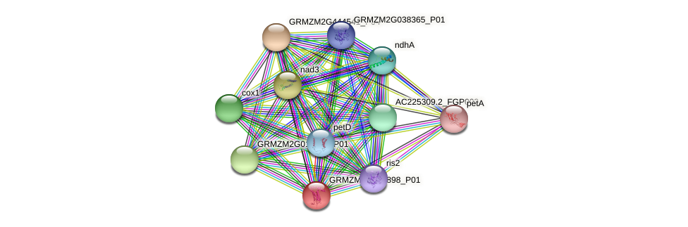 GRMZM2G060898_P01 protein (Zea mays) - STRING interaction network