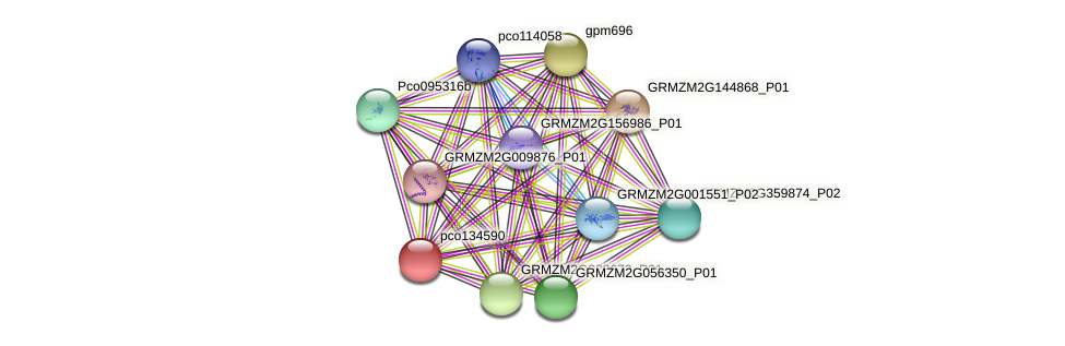 pco134590 protein (Zea mays) - STRING interaction network
