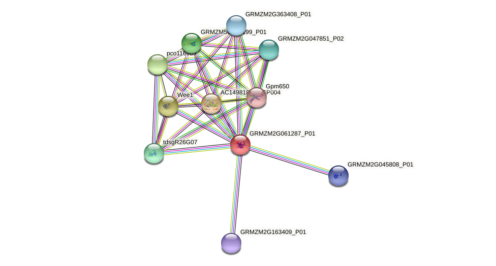GRMZM2G061287_P01 protein (Zea mays) - STRING interaction network