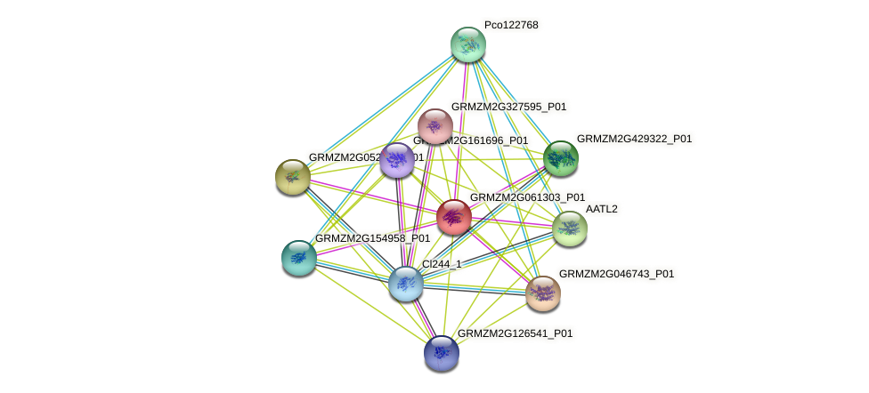 GRMZM2G061303_P01 protein (Zea mays) - STRING interaction network