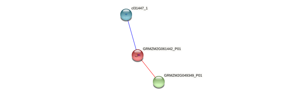 GRMZM2G061442_P01 protein (Zea mays) - STRING interaction network