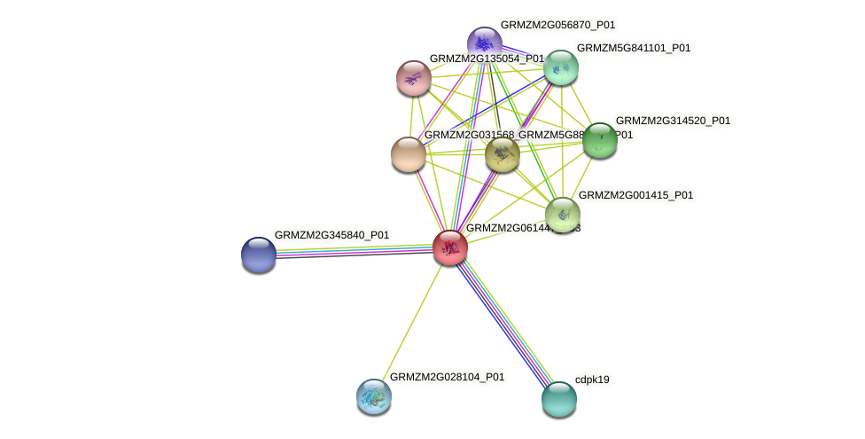 Zm.120436 protein (Zea mays) - STRING interaction network