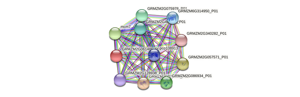 GRMZM2G061485_P01 protein (Zea mays) - STRING interaction network