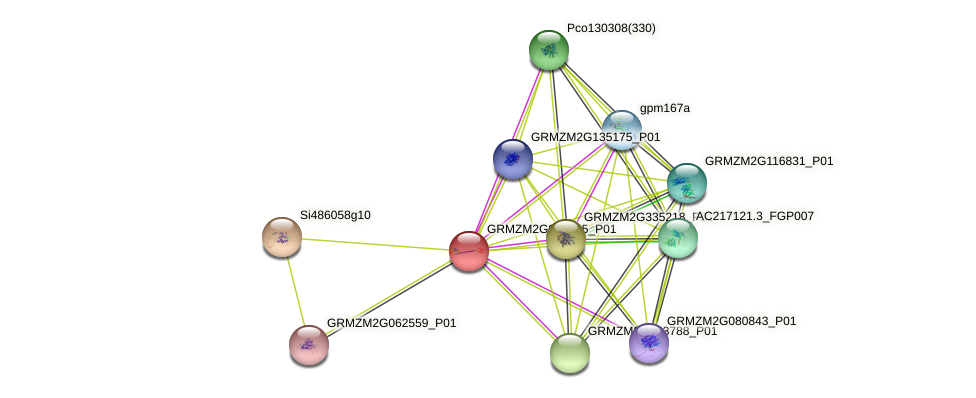 GRMZM2G061495_P01 protein (Zea mays) - STRING interaction network