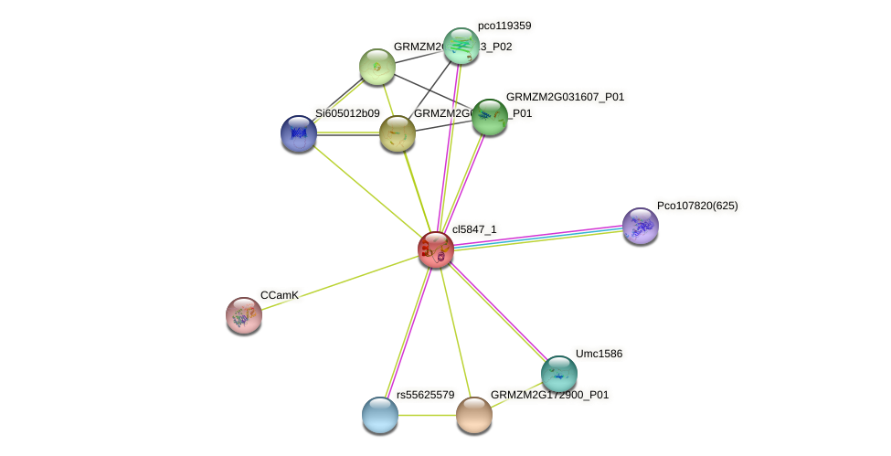 cl5847_1 protein (Zea mays) - STRING interaction network