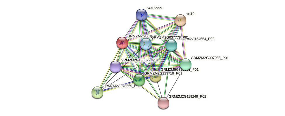 GRMZM2G061876_P02 protein (Zea mays) - STRING interaction network