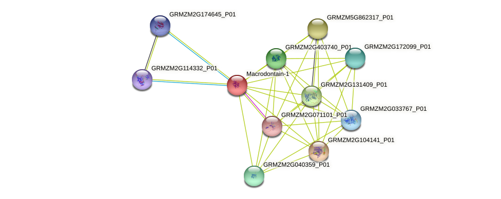 GRMZM2G061879_P01 protein (Zea mays) - STRING interaction network