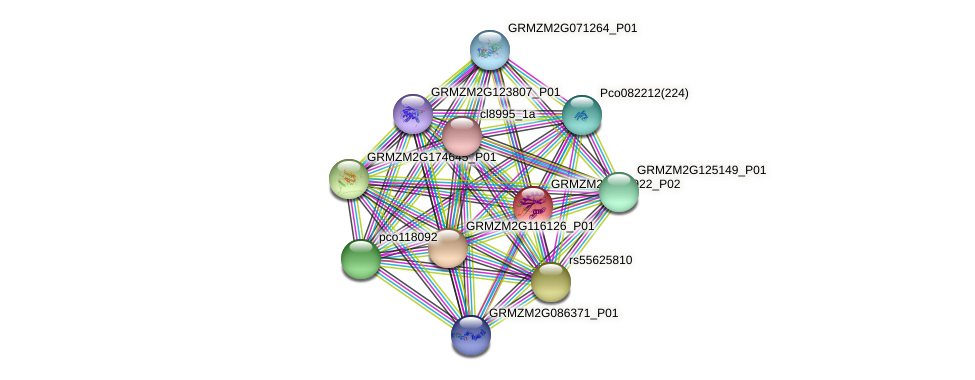 GRMZM2G061922_P02 protein (Zea mays) - STRING interaction network